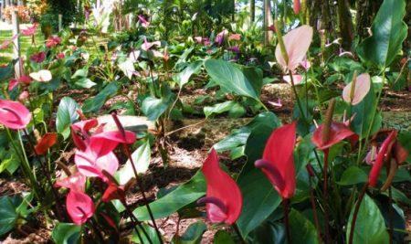 Umauma Tropical Garden Walk
